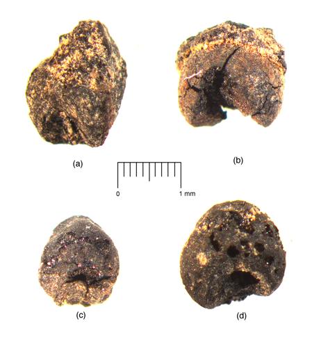 DMAP Fig. 4