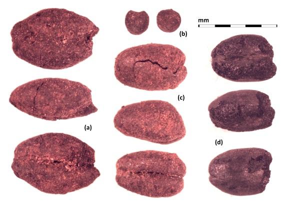 Figure 2. Adji Kui