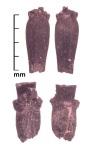 Triticum spp. Rachises, Tashbulak